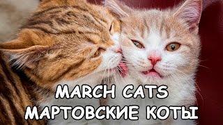 Мартовские коты 2016 - March cats - Песни и драки