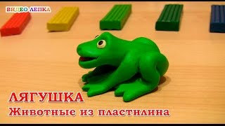 Лягушка из пластилина | Видео Лепка