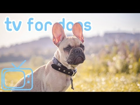 tv-for-dogs!-how-to-chill-your-dog-tv-with-relaxing-music!