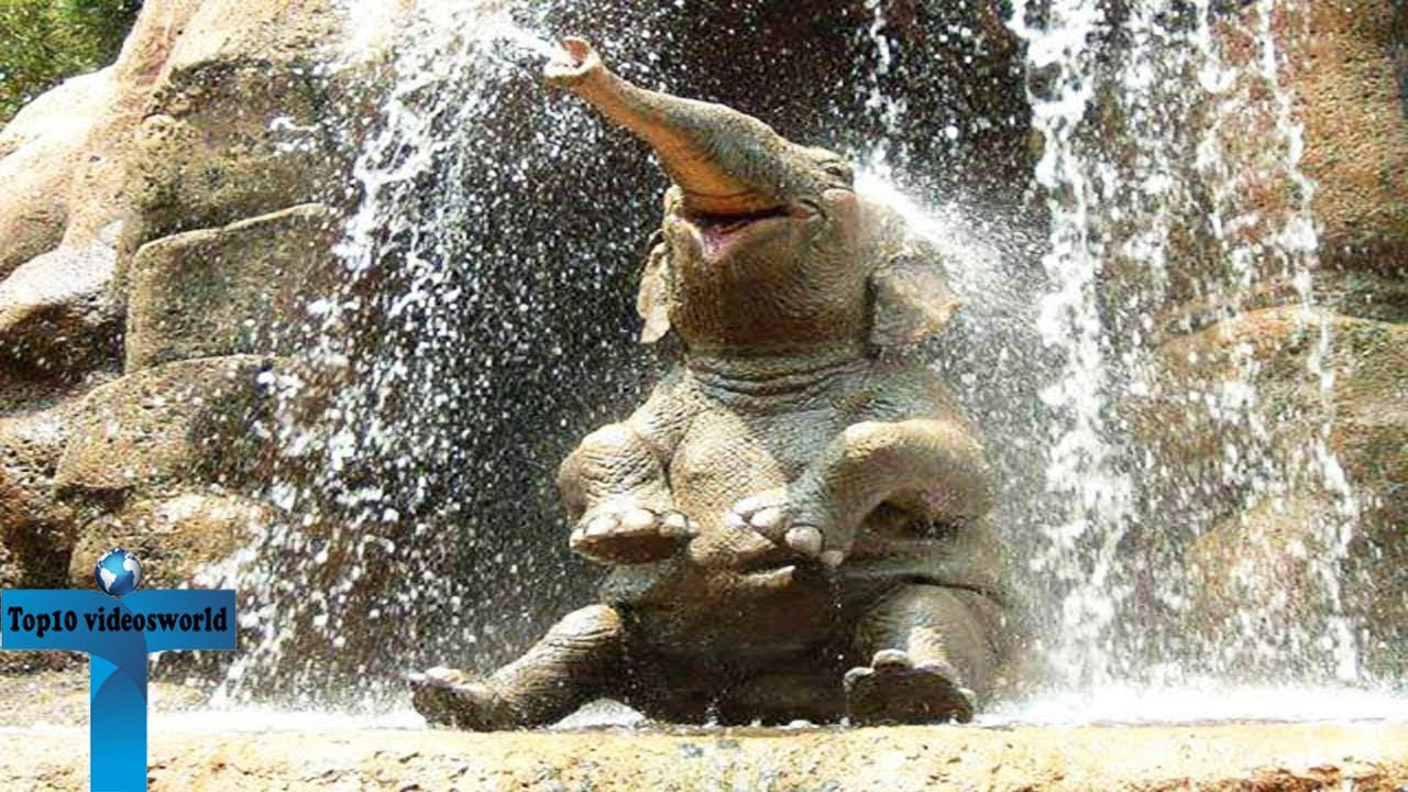 Top 20 funny cute baby elephant a cute and funny baby - Cute elephant pictures ...