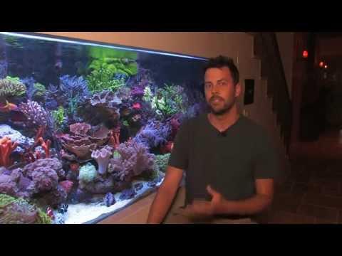 Vivid 400 Gallon Mixed Reef Aquarium 2012