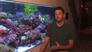 Vivid 400 Gallon Mixed Reef Aquarium 2012