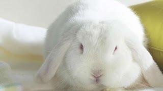 #1106. Кролики и зайцы (В мире животных)