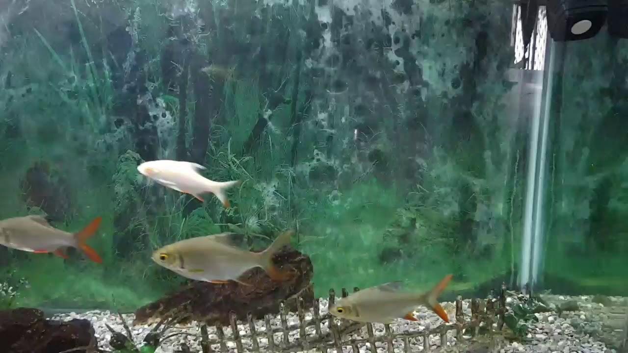 TENET FISH : Aquarium Version of Car Chase Scene of TENET ...