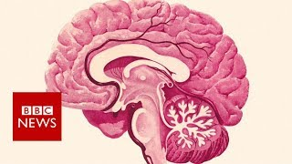 Preventing dementia: Nine tips that could help you stay sharp - BBC News