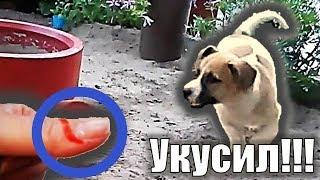 Укусила собака СОБАКА УКУСИЛА ЗА ПАЛЕЦ Щенок играет Смешной щенок