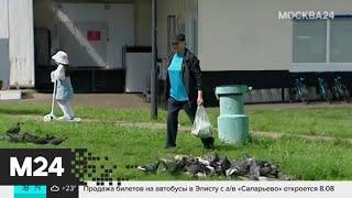 В Крылатском массово гибнут голуби - Москва 24