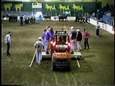 Windsor Exhibition Ox Pull Sept 1995 - Light class