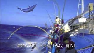 [新曲]  土佐っぽカツオ船/中西りえ cover Keizo