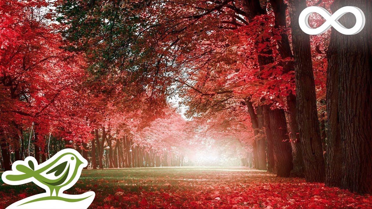 Beautiful Relaxing Music  Romantic Music with Piano Cello Guitar u0026 Violin  Autumn Colors