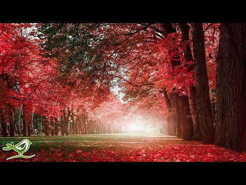 "Beautiful Relaxing Music - Romantic Music with Piano, Cello, Guitar & Violin | ""Autumn Colors"""