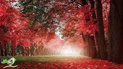 """Beautiful Relaxing Music - Romantic Music with Piano, Cello, Guitar & Violin 