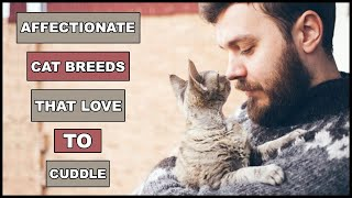 Most Affectionate Cat Breeds That Actually Love To Cuddle | Animal Globe