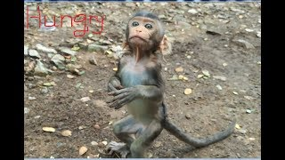 Video Pitiful small baby monkey hungry food so much, Small baby ask some food to eat download MP3, 3GP, MP4, WEBM, AVI, FLV Juli 2018