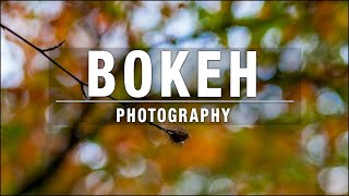 Bokeh Photography – The Easy Way