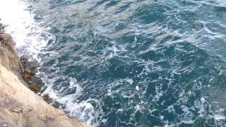 Fishing Adventures - Australian Salmon