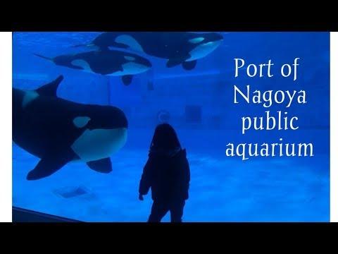 JAPON 🇯🇵 名古屋港水族館 / Port of Nagoya public aquarium / Acuario de Nagoya/