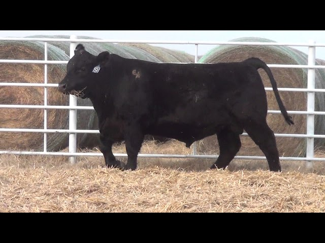 Express Ranches Lot 191