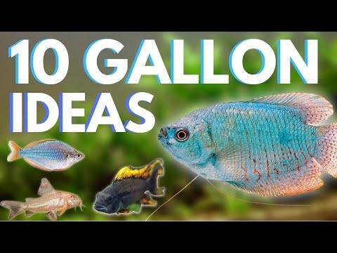 Top 10 Fish For A 10 Gallon Aquarium
