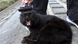 【地域猫】暴君月ノ輪の反応が面白いのでついやり過ぎてしまう・・・ごめん!【魚くれくれ野良猫】 thumbnail