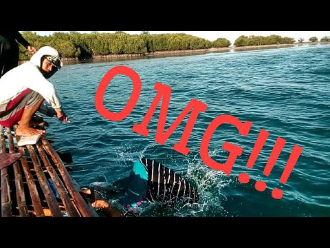 BIGGEST Fish CAUGHT in Roxas, Palawan. (MUST WATCH THIS!)