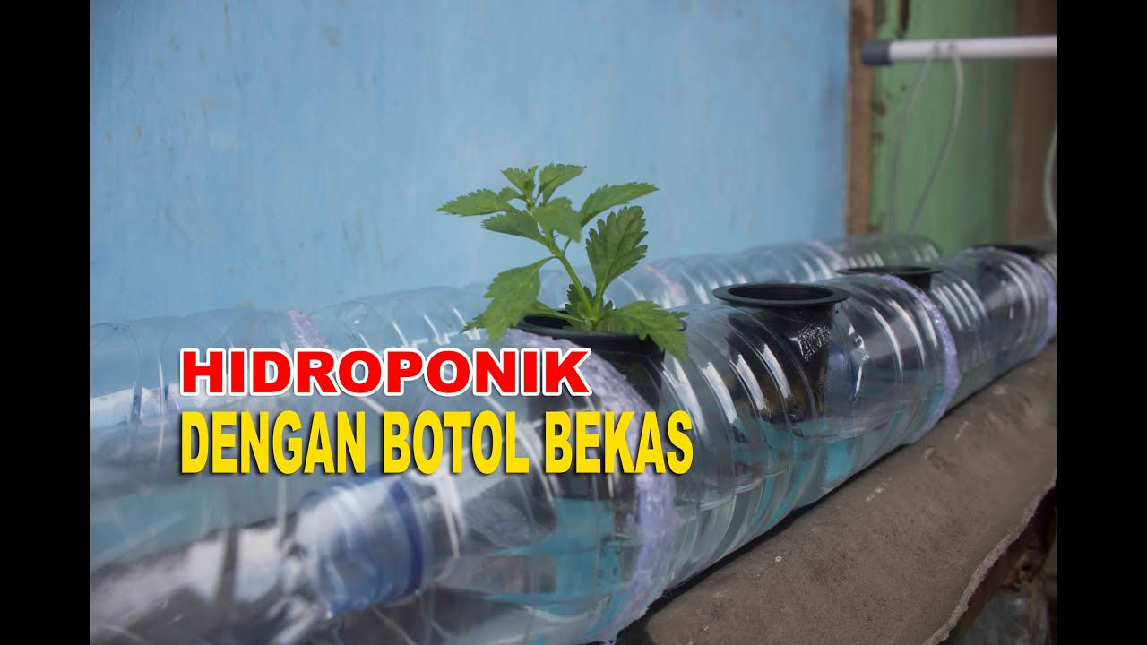 Hidroponik Dengan Botol Bekas