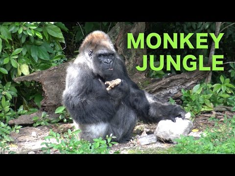 Miami Everglades RV Camping and the Monkey Jungle | Traveling Robert