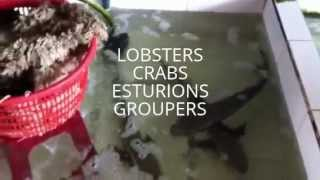 Fish Farm Saigon, Vietnam. groupers, lobsters, etc..Piscifactoria con langostas, esturiones, etc