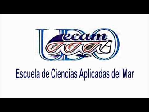 Trailer: Cultivo de Mejillones en Balsas de Polietileno en Isla ...