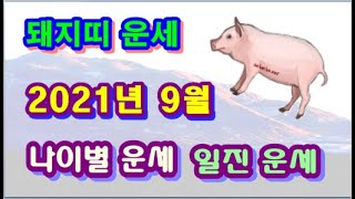 9월 돼지띠 운세 - 2021년 9월 신축년 정유월 돼지띠 일진 사주 운세보기