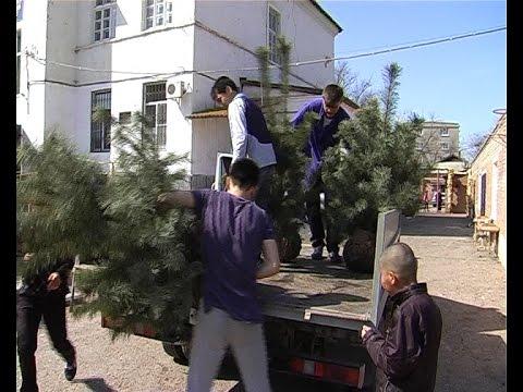 Астраханский Питомник: грузовик растений в подарок Школе-интернату