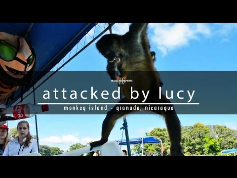 Lucy the Spider Monkey Goes Apeshit Monkey Island, Granada, Nicaragua