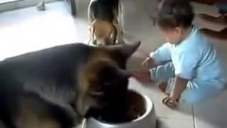 Ребёнок и собака не могут поделить миску с едой, смех да и только!
