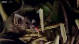 The Bat Man of Mexico: Trailer - Natural World - BBC Two
