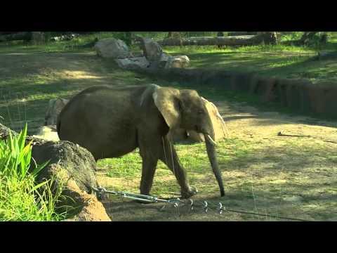 Zoo Trick Shots   Legendary Shots