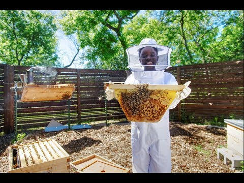 Meet Mikaila: 12yearold CEO, entrepreneur and bee conservationist