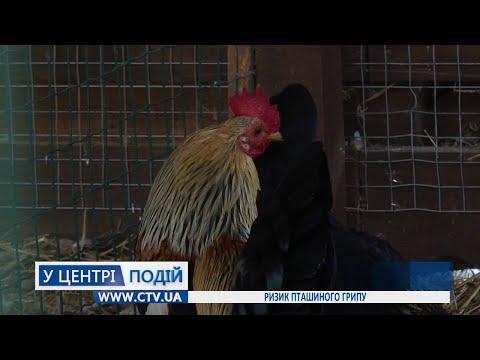 Телеканал C-TV: Ризик пташиного грипу