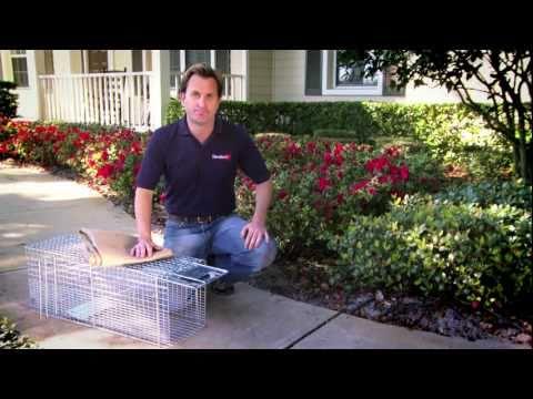 Feral Cat Traps - Havahart.com