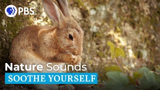 Nature Sounds | Soothe Yourself
