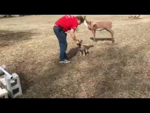 "12 Wk German Shepherd ""Gabi"" Early Obedience Training W/Protection Dog Sales"