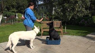 ДТ-24. Как определить вес собаки не выходя из дома.