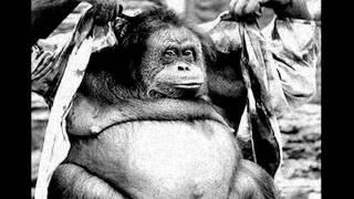 """""""Fat Ape's Boogie"""""""
