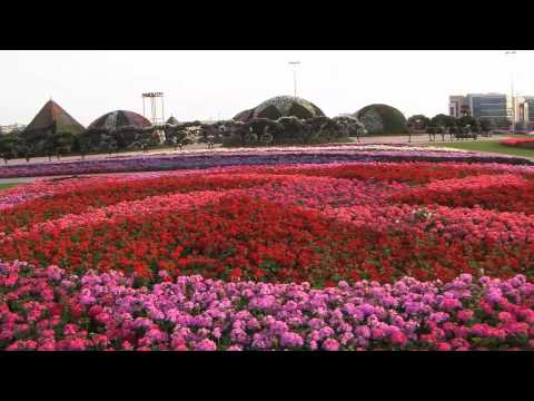 Dubai's Miracle Garden has 45 million flowers