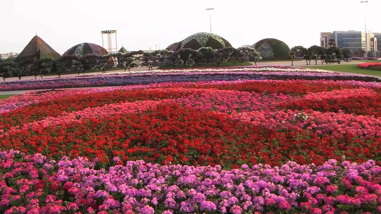 Dubai S Miracle Garden Has 45 Million Flowers Youtube