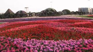 Dubai's Miracle Garden Has 45 Million Flowers