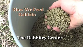 What I Feed & Don't Feed My Rabbits