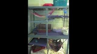 How Set Ferret Nation Cage And Playpen Together