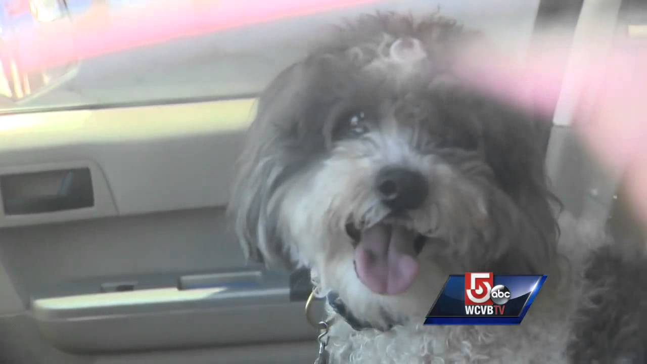 How To Report A Dog Locked In A Hot Car