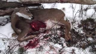 Rifle Season Deer Hunting 2010 Pennsylvania #3