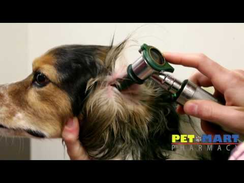 What to Expect During a Routine Visit to the Vet